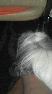 Snoopy sleeping on moms feet