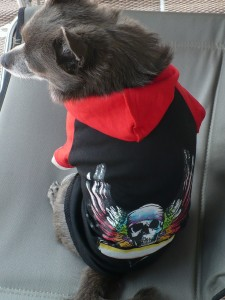 Bret Michaels dog clothes giveaway