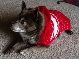 Roxy sweater, wordless Wednesday