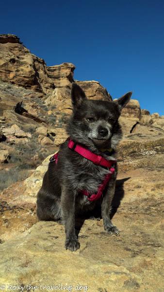 Desert pictures-Roxy