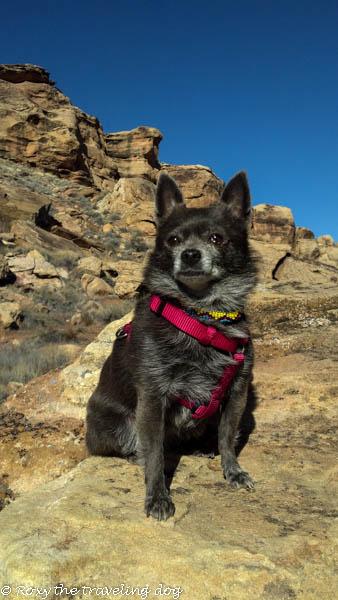 Desert pictures - Roxy