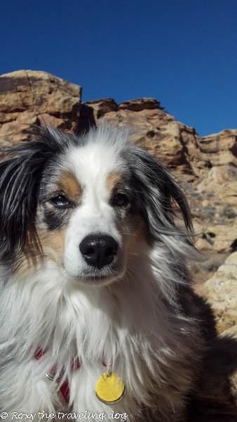 Desert pictures-Torrey