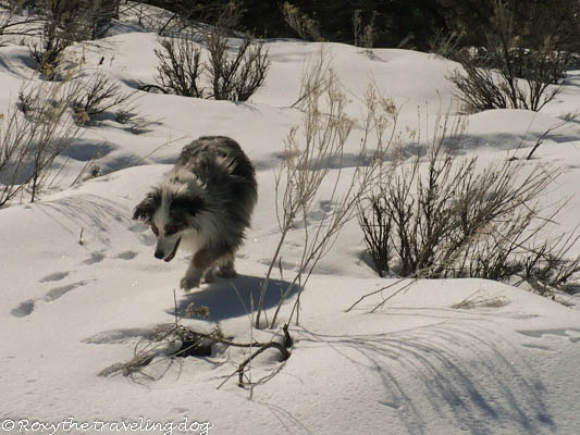 wordless wednesday,snow hike,dogs