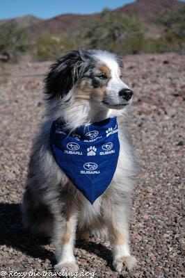 Subaru for us and every dog