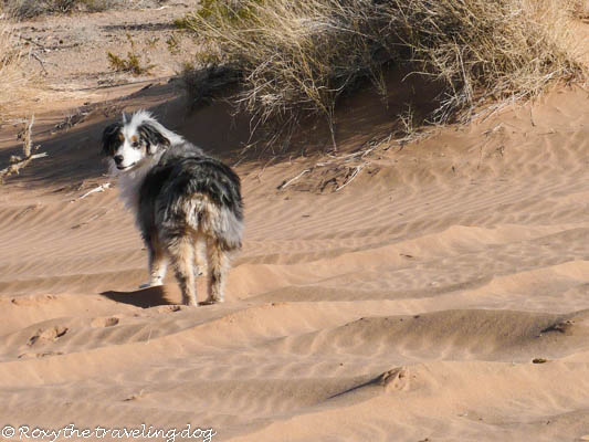 Fun at the sand dunes