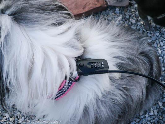 StayBoy lock, dog lock