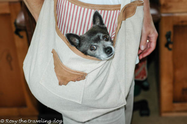 dog carrier,bag,tote