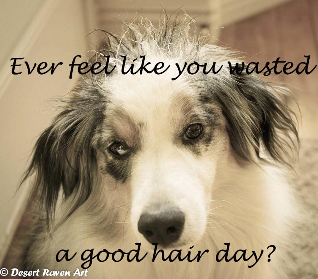 dog, bad hair day