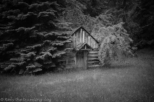 black and white sunday, old oregon cabin