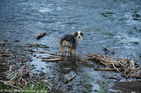 Thursday thoughts with Torrey, imnaha river
