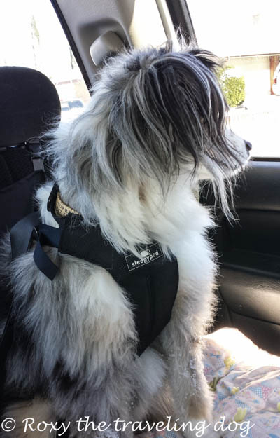 How to have the safest traveling dogs, clickit