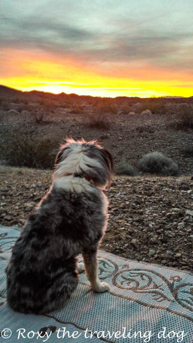 watching the sunrise, desert sunrise