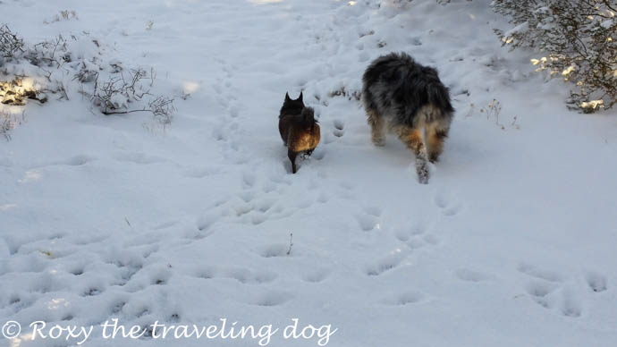 It followed us here, snow, desert