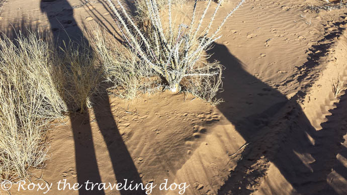 Sand dunes and cactus