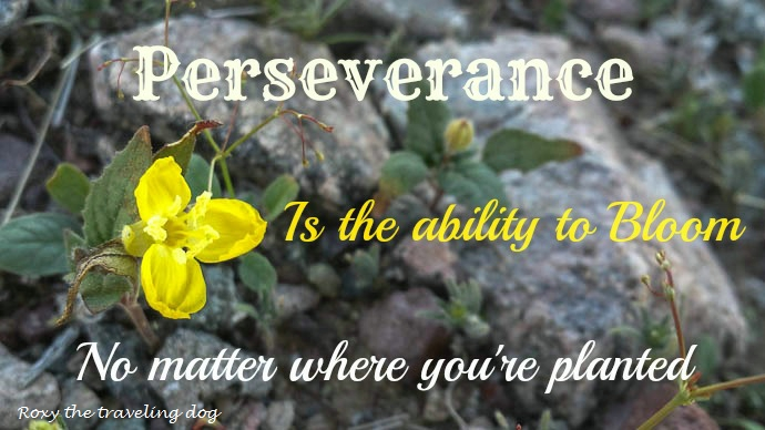 Pereseverance, Persevering in life