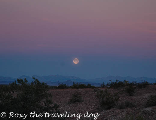 Full moon in the desert, Persevering in life