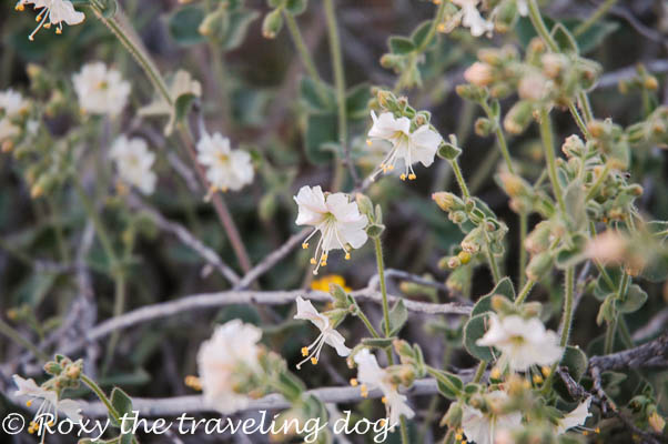 Wickenburg desert photos,