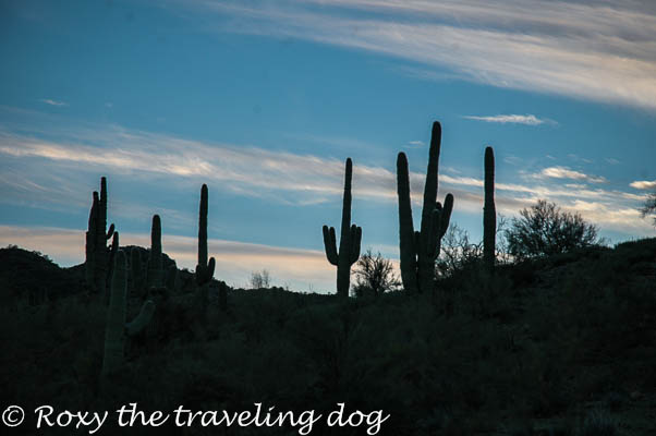 Wickenburg desert photos, saguaro,sunsets,desert