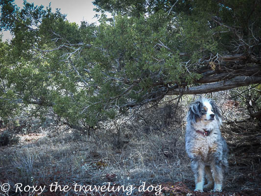 Thursday thoughts with Torrey, dogs, hiking, desert