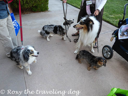 We got to meet the Cascadian Nomads.  Amazing time at Blogpaws.