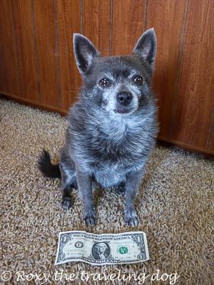 Roxy with a dollar bill