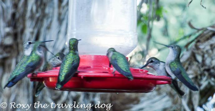 A hummingbird story