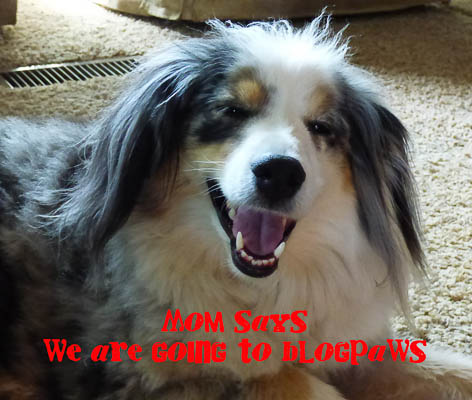 Blogpaws here we come