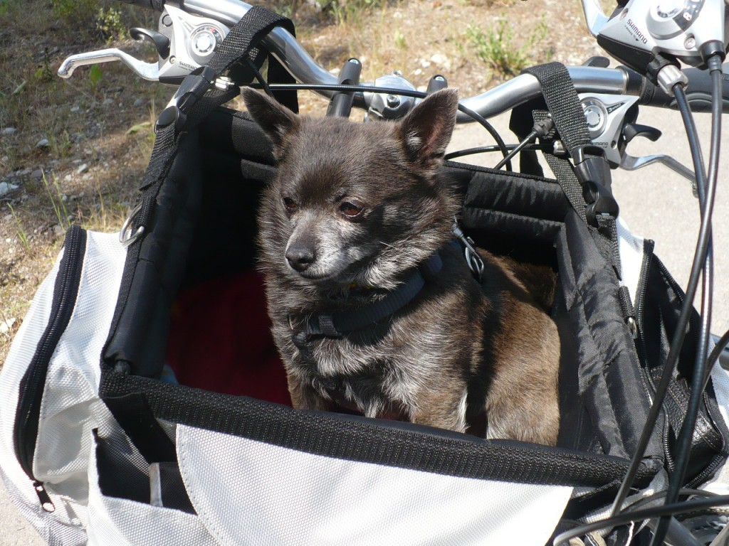 Solvit tagalong sport bike basket. 10 Must Have Dog Products for Summer Fun