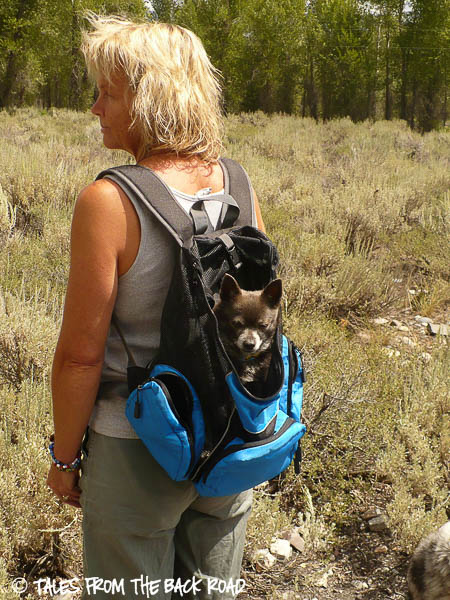 Kyjen outward hound back pack