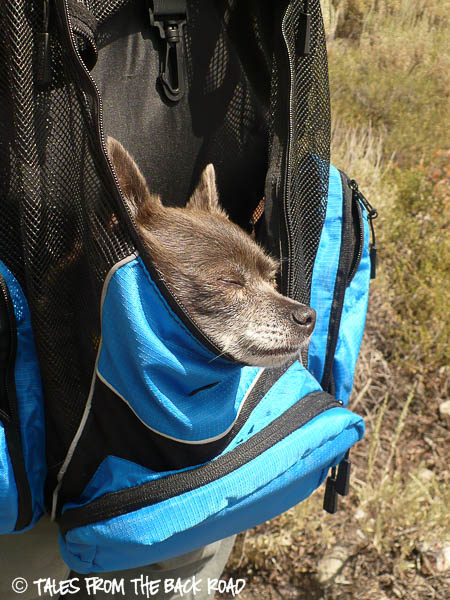 Outward Hound backpack carrier review