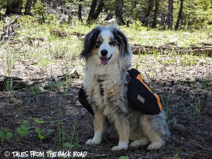 Kyjen dog back pack review