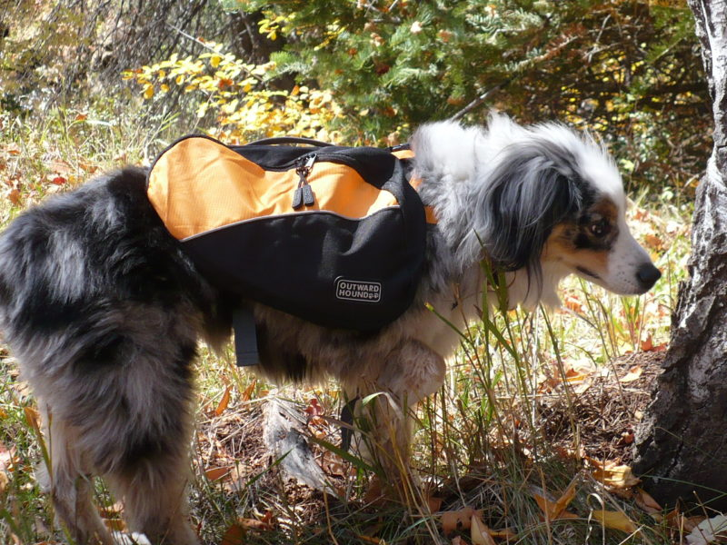 outward hound dog back pack. 10 Must Have Dog Products for Summer Fun