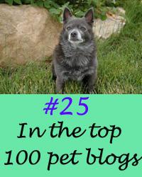 Top pet blog