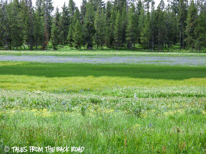 Flowers look like a pond