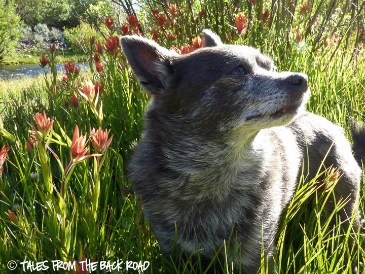 More beauty in Idaho and Roxy loves the flowers