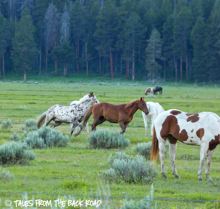 Horses running in the pasture