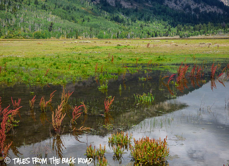A pond in a mountain meadow