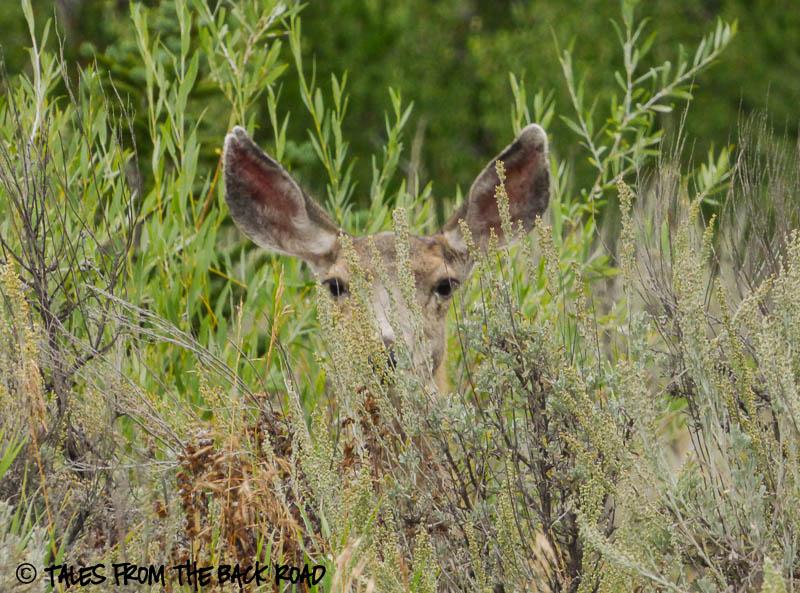 Watchful deer mom