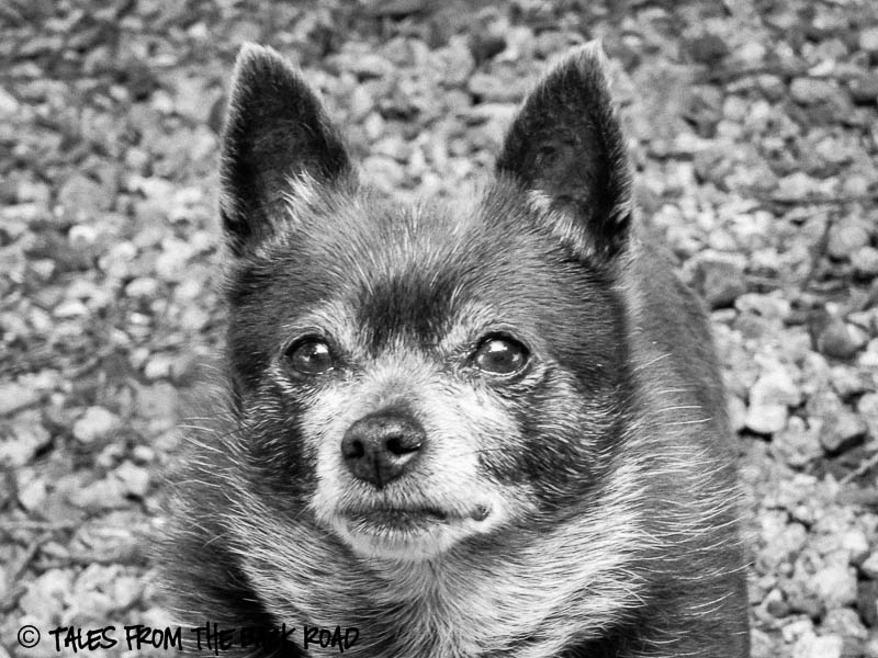Roxy in black and white