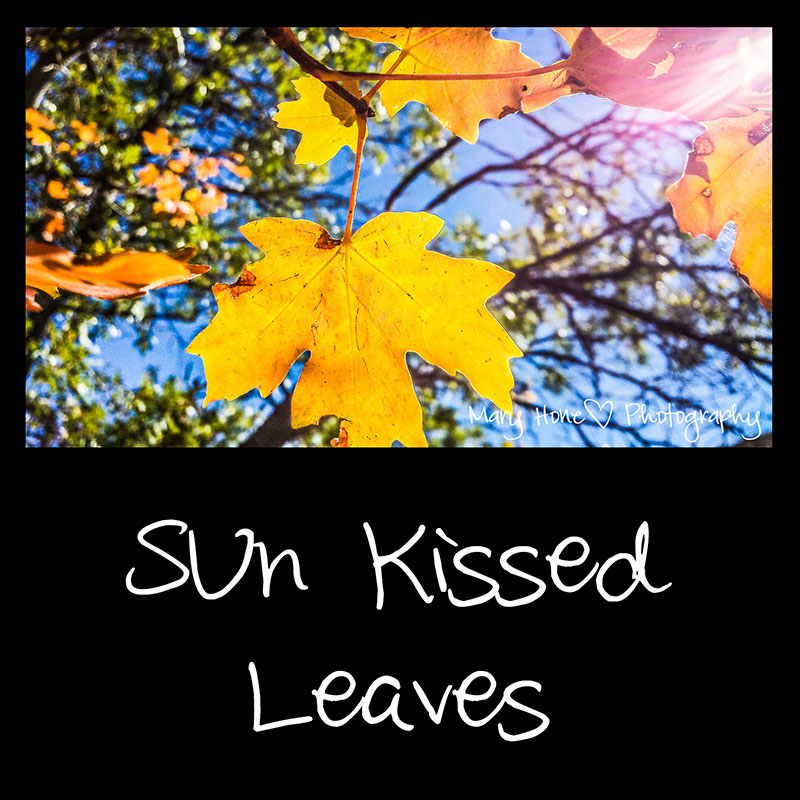 The end of a season. Son kissed leaves