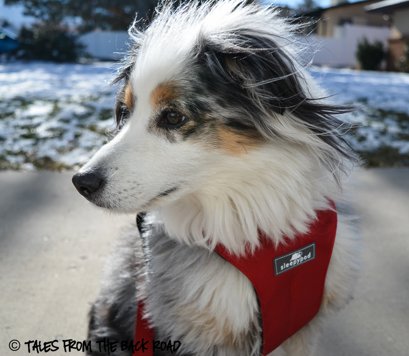 Review of the sleepypod clickit sport. Traveling with dogs