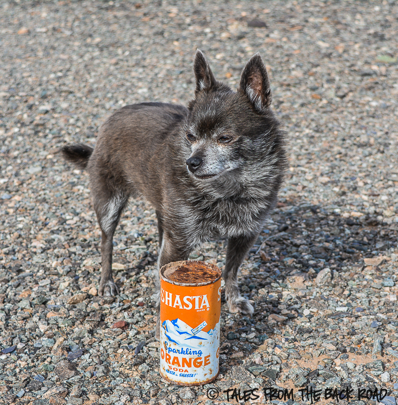 Old antique Shasta can