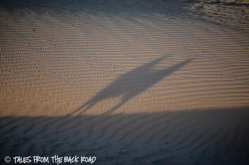 A fun evening at the sand dunes