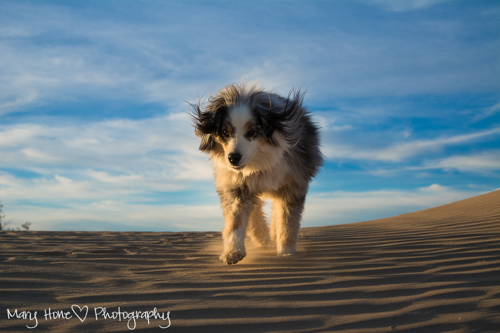 A fun evening at the sand dunes