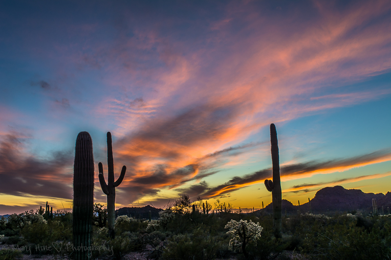 Sunset in the sonoran