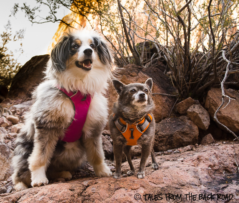 Ruffwear front range harness. 10 Must Have Dog Products for Summer Fun