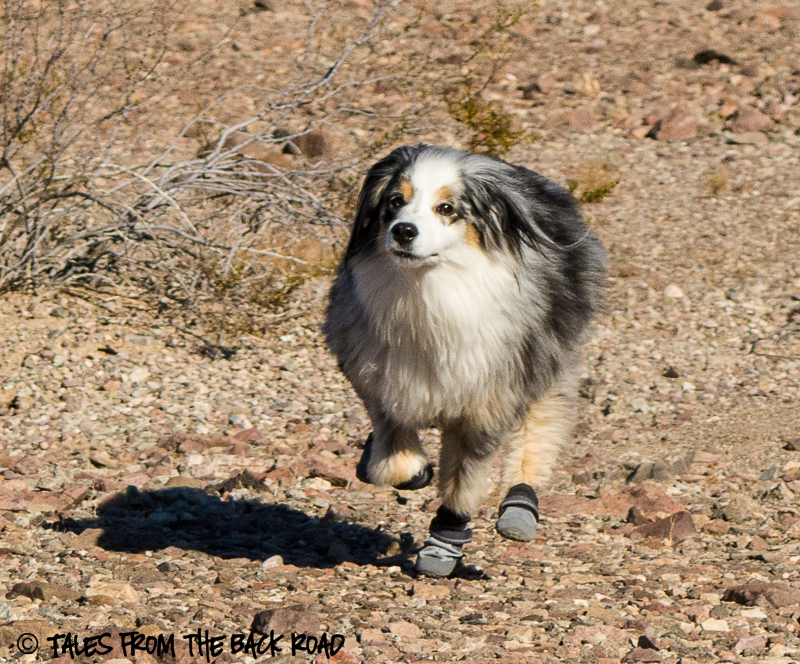 Ruffwear summit trex dog boot