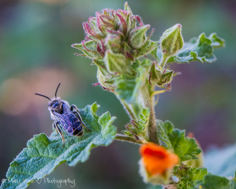 Bug and a flower