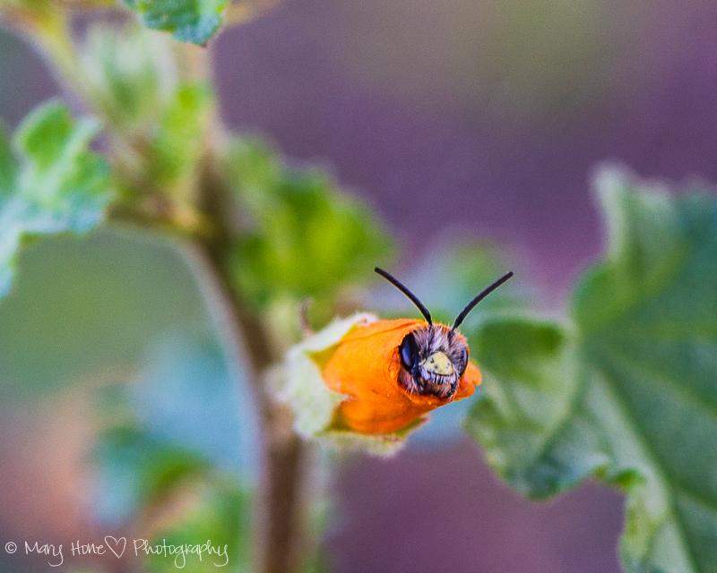 Snug as a bug in a...flower
