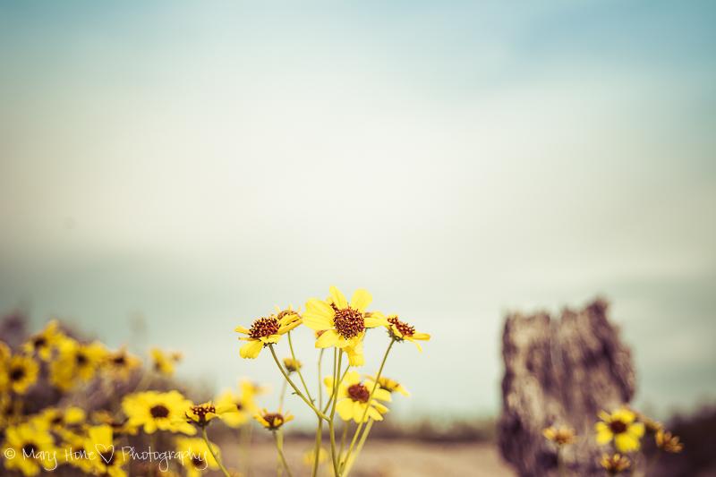 Beauty in the desert, flowers